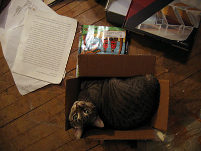 catinabox.jpg